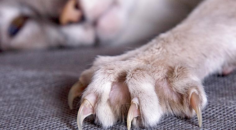 Нужно ли удалять когти у кошек?