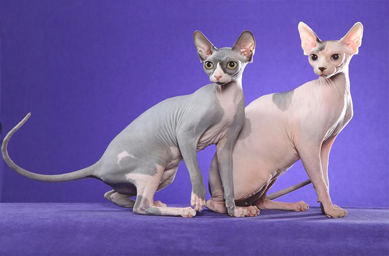 Салон для питомцев: уход за котятами
