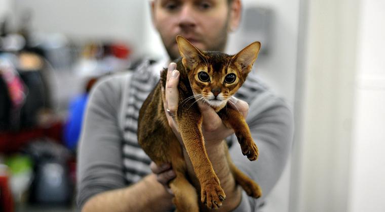 Выставки кошек: быть или не быть?