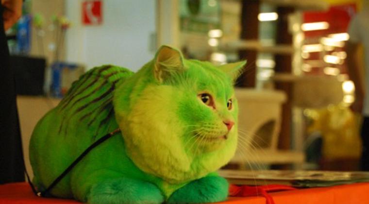 Опасно ли красить домашнее животное?