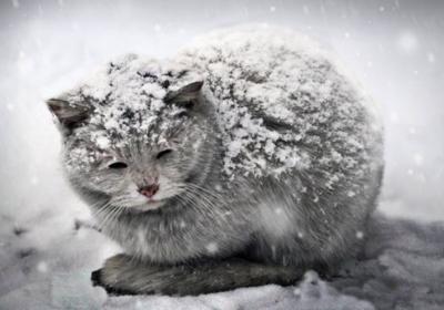 5 способов помочь бездомным животным пережить зиму