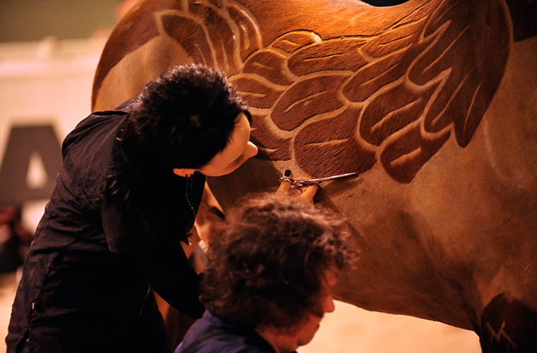 Груминг лошади (+12 фото креативных стрижек)