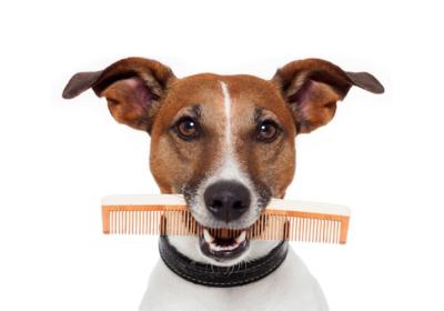 Какая расческа подойдет Вашей собаке?